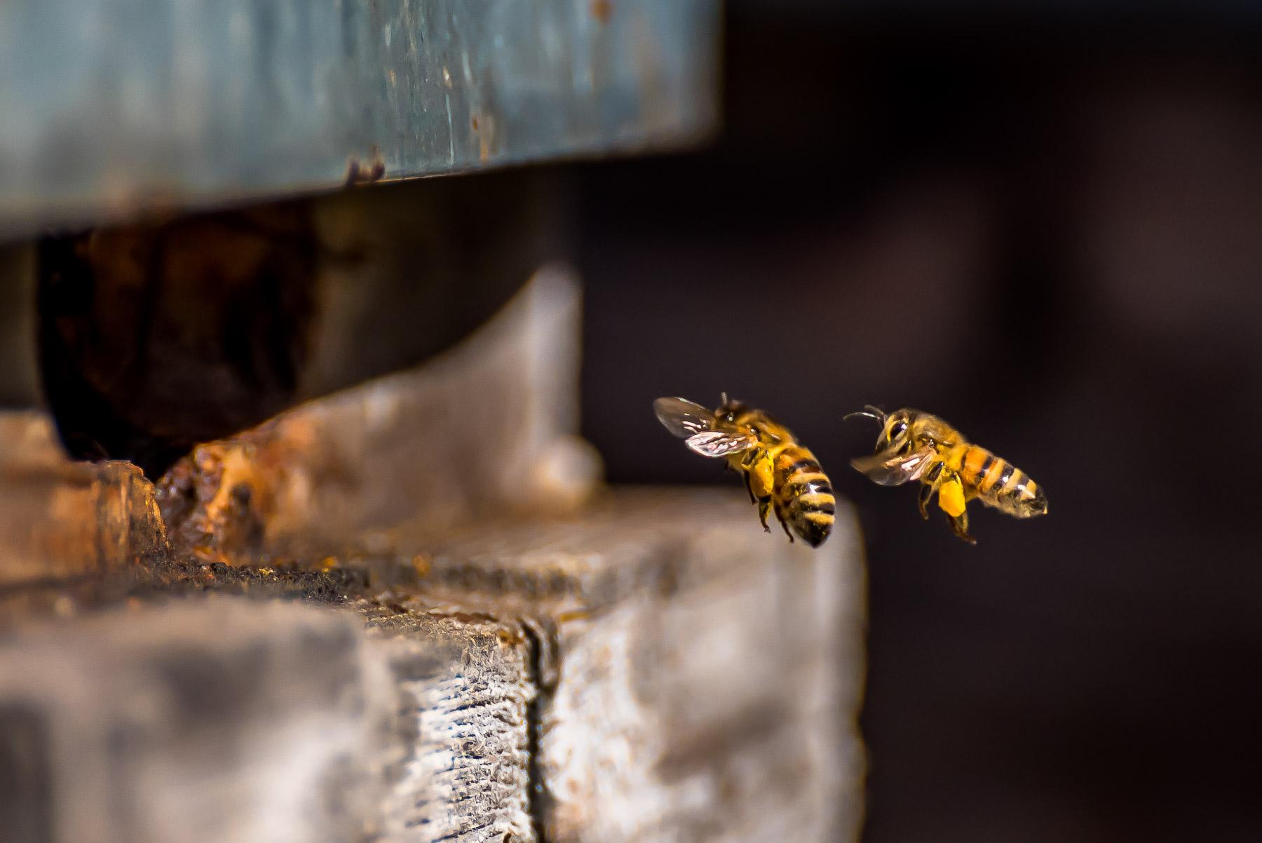 15 ruches