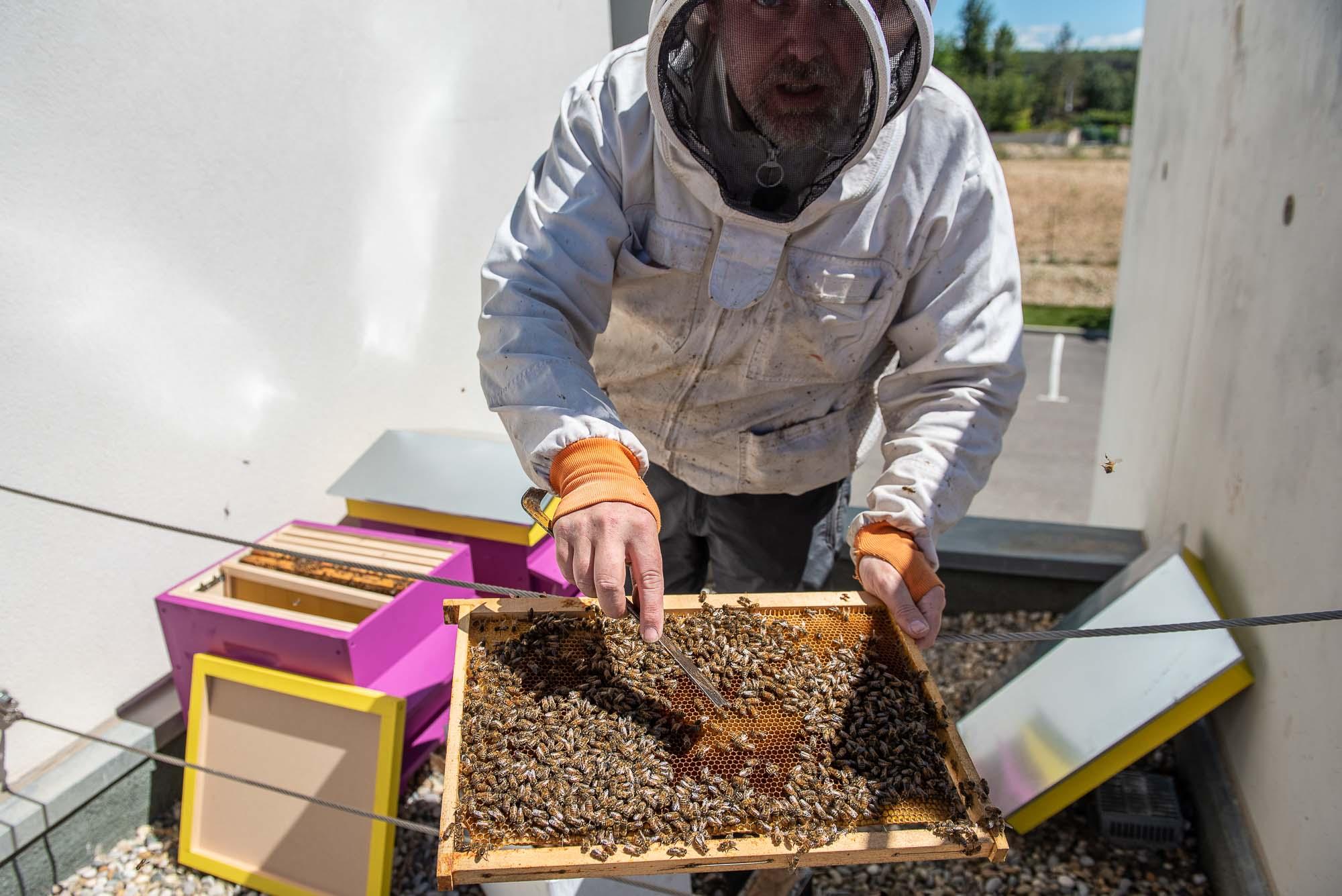 Implantation du rucher en toiture